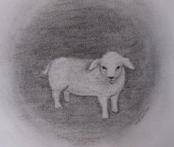 sheep 012